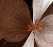 Abstract Nature Photography - Begonia by Ben and Raisa Gertsberg