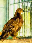 Eagle Paintings - Behind bars by George Rossidis