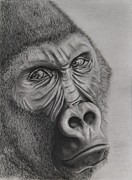 Ape Originals - Behind the Eyes of a Silverback Gorilla by Holly Hornyan