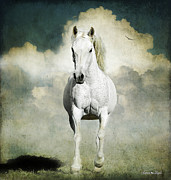Karen Slagle Photo Framed Prints - Behold a White Horse Framed Print by Karen Slagle