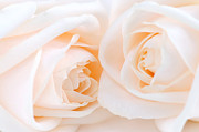 Cream Photos - Beige roses by Elena Elisseeva