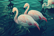 Flamingos Posters - Being With You Poster by Laurie Search