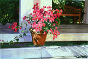 Steps Painting Posters - Bel-Air Bougainvillea Pot Poster by David Lloyd Glover