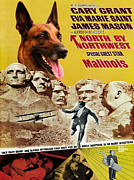 Movie Art Paintings - Belgian Malinois Art Canvas Print - North By Northwest Movie Poster by Sandra Sij