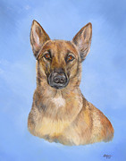 Police Paintings - Belgian Malinois by Gail Dolphin