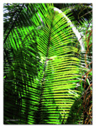 Mangrove Forest Digital Art Metal Prints - Belize Caracol Jungle Metal Print by Joan  Minchak