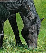 Black Horse Pastels Prints - Bella and Sarah-Bella Print by Brent Ander
