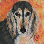Saluki Framed Prints - Bella Framed Print by Cori Solomon