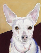 White Dogs Pastels Framed Prints - Belle Framed Print by Pat Saunders-White