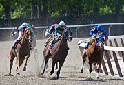 Race Horse Photos - Belmont Race by Alida Thorpe