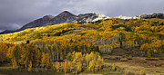 Aspens Prints - Below the Ruby Range Print by Stuart Gordon
