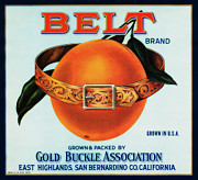 Buckle Posters - Belt Oranges Poster by Cheryl Young
