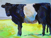 Mike Jory - Belted Galloway Cow