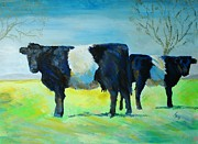 Mike Jory - Belted Galloway Cows