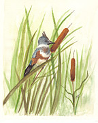 Kingfisher Drawings Framed Prints - Belted Kingfisher Framed Print by Syl Lobato
