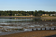 Seaside Framed Prints - Bembridge from St Helens at Low Tide Framed Print by Rod Johnson