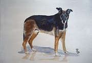 Lurcher Prints - Ben Print by Carole Robins