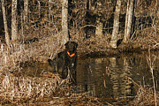 Animal Companion Prints - Ben Print by Cindi Ressler