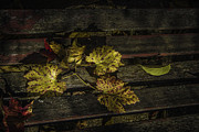 Grape Leaves Photos - Bench And Leaves by Mitch Shindelbower