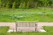 Casual Art Posters - bench in an English Countryside scene Poster by Fizzy Image