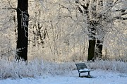 Bench In The Park Print by Gynt
