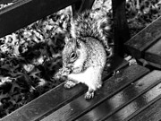 Kimmarie Martinez - Bench Squirrel