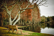 Cypress Knees Photos - Bench With A View by Carolyn Marshall