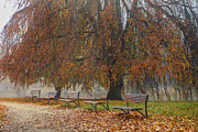 Patricia Hofmeester - Benches in autumn park