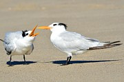 Tern Metal Prints - Bending Moms Ear  Metal Print by Fraida Gutovich