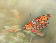 Gulf Fritillary Photos - Beneath My Wings by David and Carol Kelly