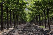 James Brunker - Beneath the Vines