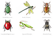 Control Drawings Posters - Beneficial Garden Insects Poster by Tristan Berlund