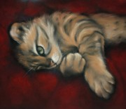 Kitten Prints Pastels Framed Prints - Bengal Dreaming Framed Print by Cynthia House