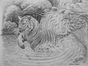 Nature Divine Drawings Posters - Bengal Tiger Poster by Brent  Mileham