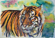 Bengal Painting Posters - Bengal Tiger Poster by Christy  Freeman