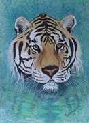 David Hawkes - Bengal Tiger in water