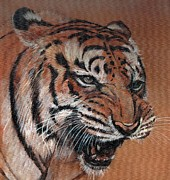 Bengal Painting Framed Prints - Bengal Tiger Framed Print by Morgan Fitzsimons