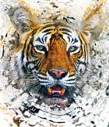 Sergey Korotkov - Bengal tiger