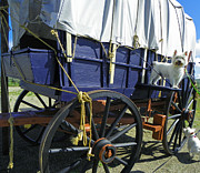 Photographs Mixed Media - Beni on Oregon Trail Wagon by Photography Moments - Sandi