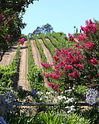 Benziger Winery In The Sonoma California Wine Country 5d24495 Vertical Print by Wingsdomain Art and Photography