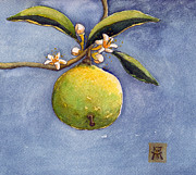 Grapefruit Painting Prints - Bergamot Print by Katherine Miller