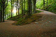 Norwegian Sunset Photo Prints - Bergen Pathway Print by Benjamin Reed
