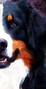 Dogs Digital Art Metal Prints - Bernese Mountain Dog - Half Face Metal Print by Sharon Cummings