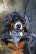 Collies Digital Art Posters - Bernese Mountain Dog Poster by Laura Rothstein