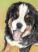 Dog Watercolor Framed Prints - Bernese Mountain Dog puppy watercolor Framed Print by Cherilynn Wood
