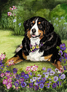 Terry Albert - Bernese Mountain Dog