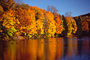 Fall Colors Art - Bernharts Dam fall 008 by Scott McAllister