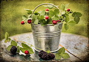 Blackberries Framed Prints - Berries Framed Print by Darren Fisher