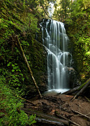 Santa Cruz Art - Berry Creek Falls in Big Basin by Matt Tilghman