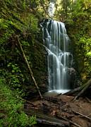 Berry Creek Falls In Big Basin Print by Matt Tilghman